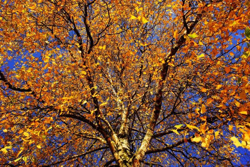Tree, Nature, Branch, Yellow Free Public Domain Cc0 Image