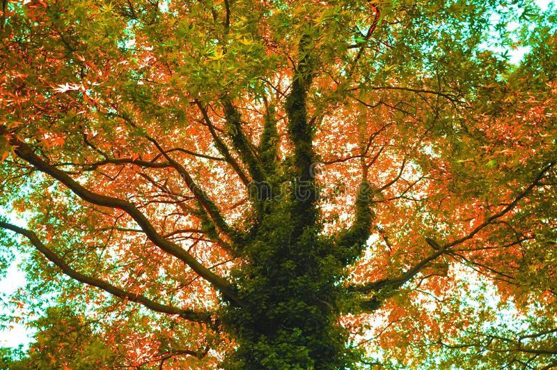 Tree, Nature, Leaf, Autumn Free Public Domain Cc0 Image