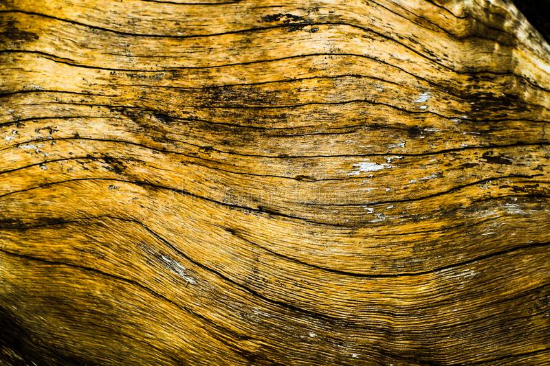 Tree nature old branch structure board wood texture trunk old formation natural soil material surface background rings cross royalty free stock photos