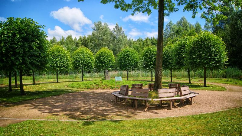 Tree, Nature Reserve, Estate, Park royalty free stock image