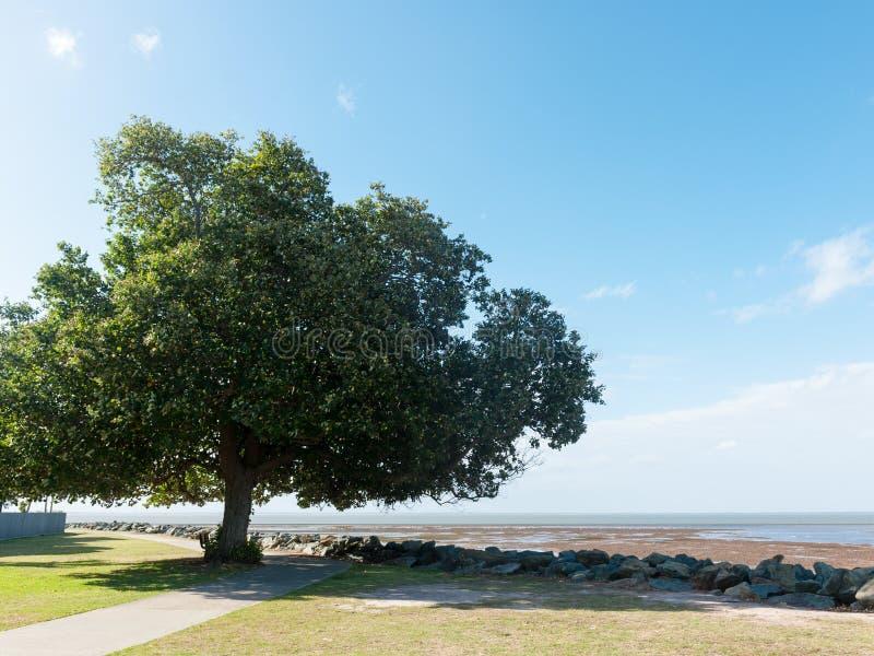 Tree near beach stock image