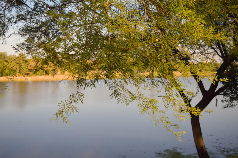 Tree near bhopal lake during sunset. In spring stock photos