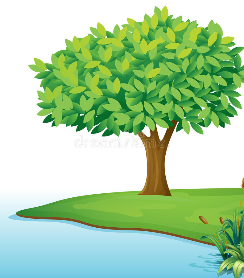 A tree near the body of water. Illustration of a tree near the body of water on a white background royalty free illustration