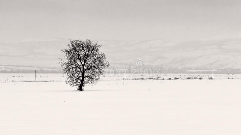 A tree near Curvature Carpathians. A tree in a field covered with snow near Curvature Carpathians. Photo taken from train royalty free stock photo