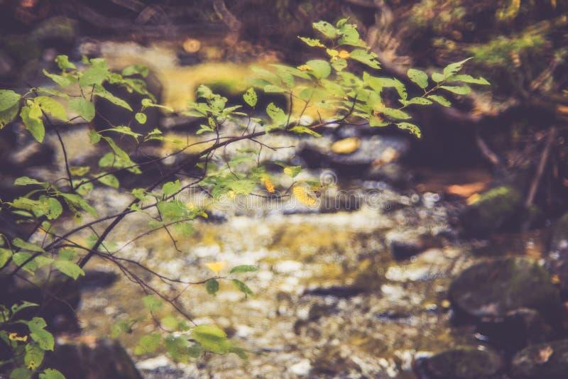 Tree near water, beautiful landscape stock photos