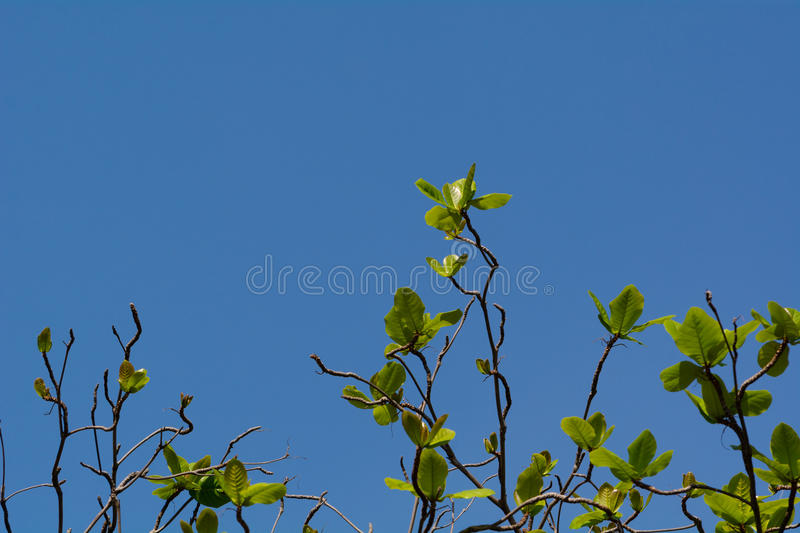 Tree with new leaves. stock photo