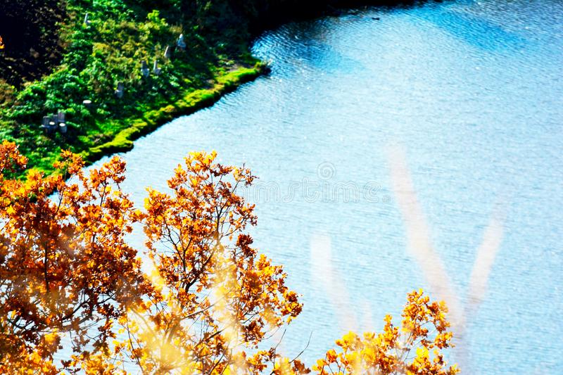 A tree next to a pond. Tree next to a pond royalty free stock images
