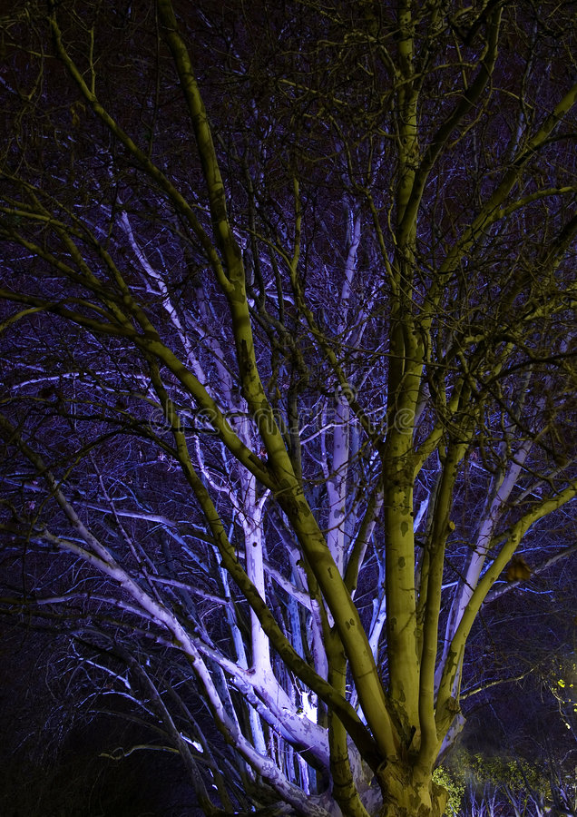 Download Tree at Night stock photo. Image of nature, light, trees - 160948