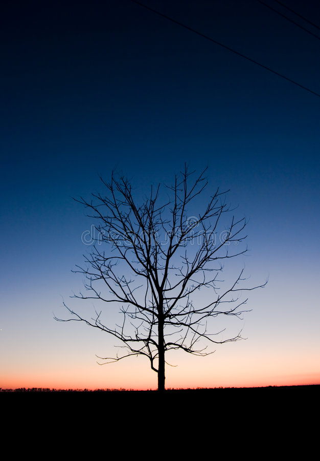 Download Tree in night stock image. Image of night, backgrounds - 7032315