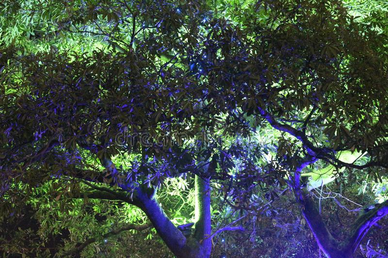 Tree in night stock images