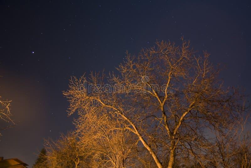 Tree and night sky royalty free stock photo