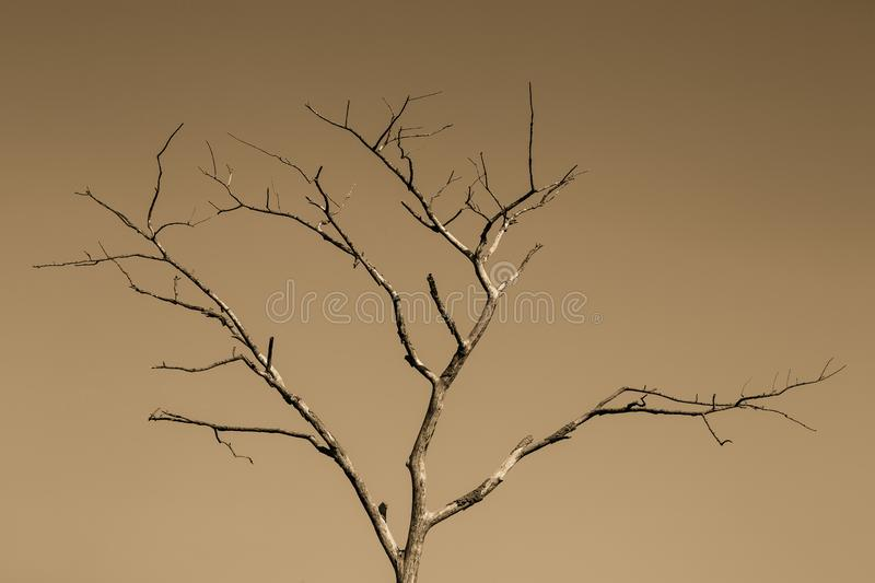 A Tree With No Leaf - Chiang Rai, Thailand. A Tree With No Leaf, conceptual - Chiang Rai, Thailand stock image