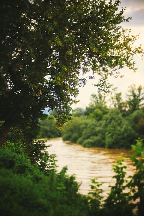 Tree och flod fotografering för bildbyråer