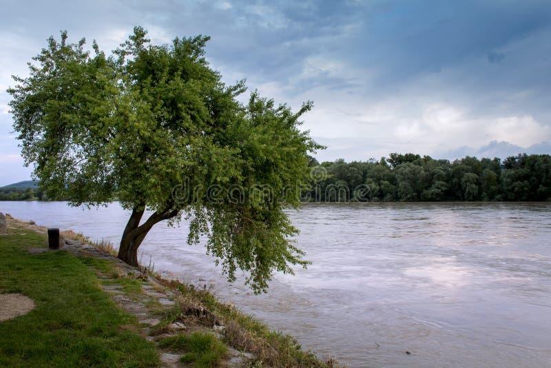 Tree och flod arkivbild