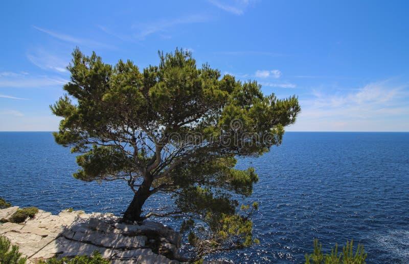 Tree och hav arkivfoto