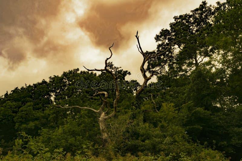Tree och skyen royaltyfria bilder