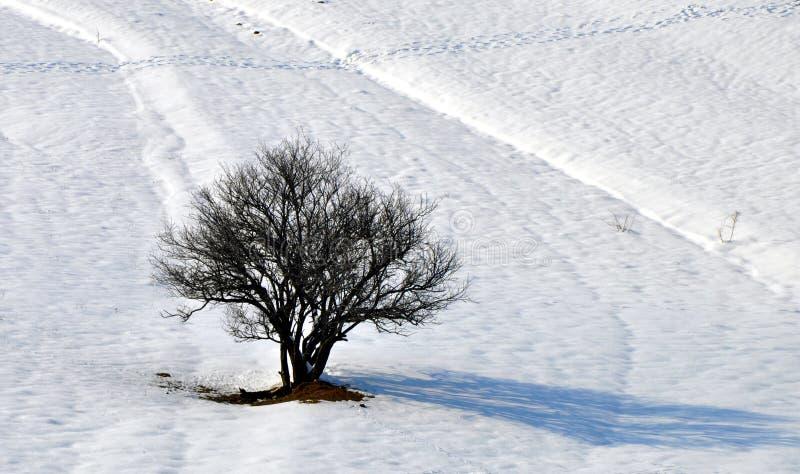 Tree och snow arkivfoto