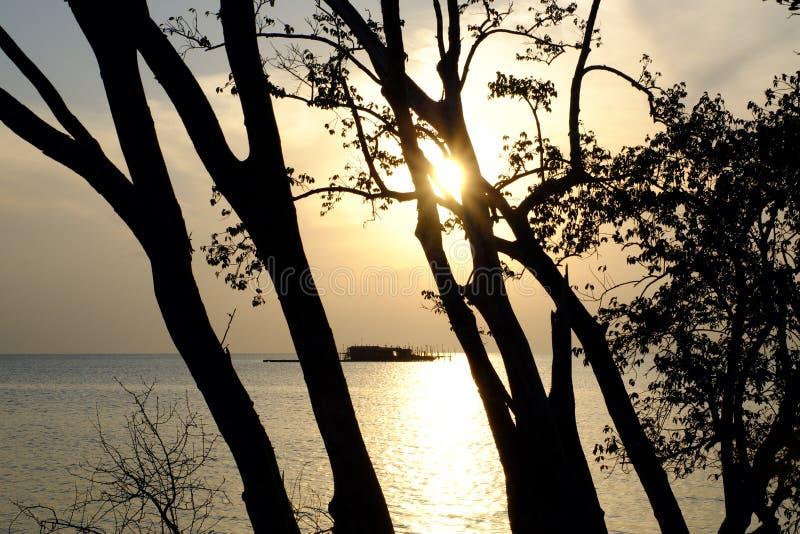 Tree och solnedgång arkivbilder