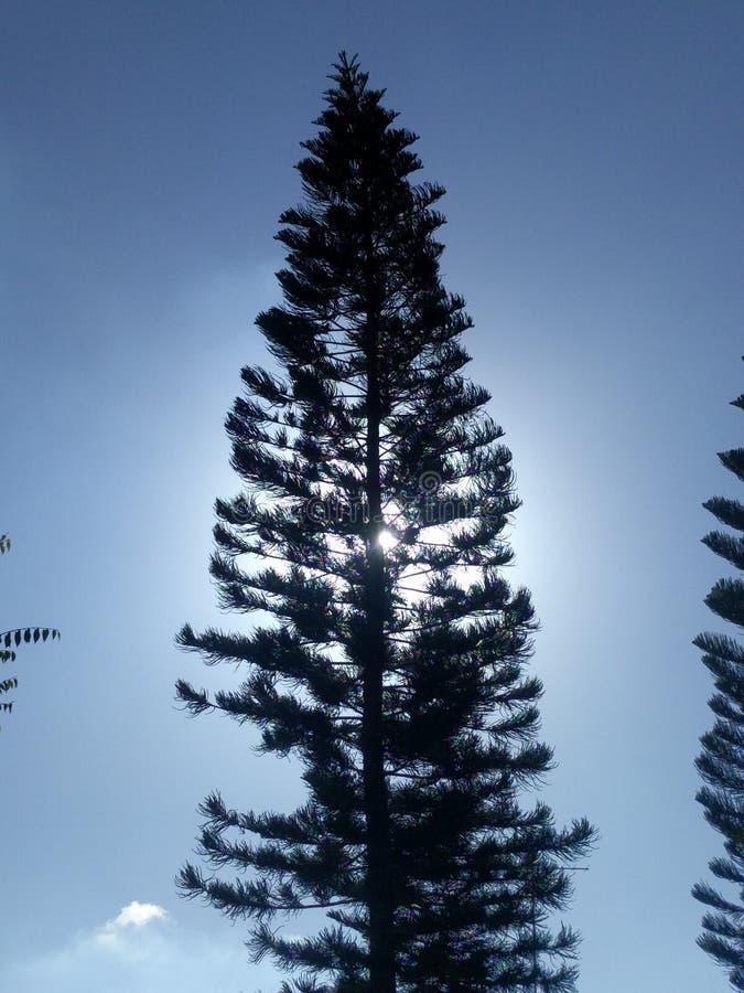 Tree och sun royaltyfri foto