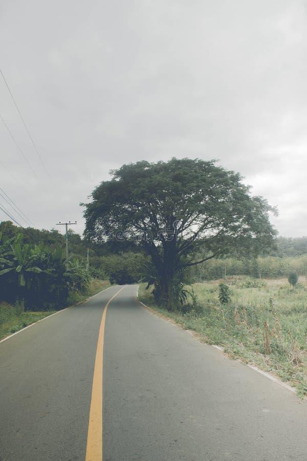 Tree och väg royaltyfri foto