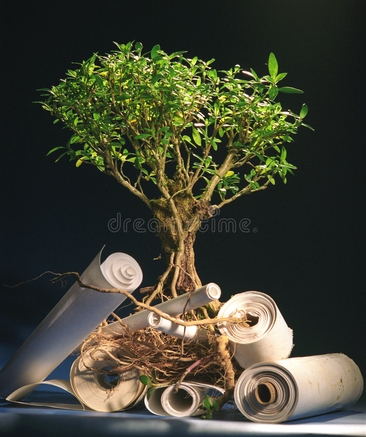 Free Tree Of Knowledges Stock Image - 1214311