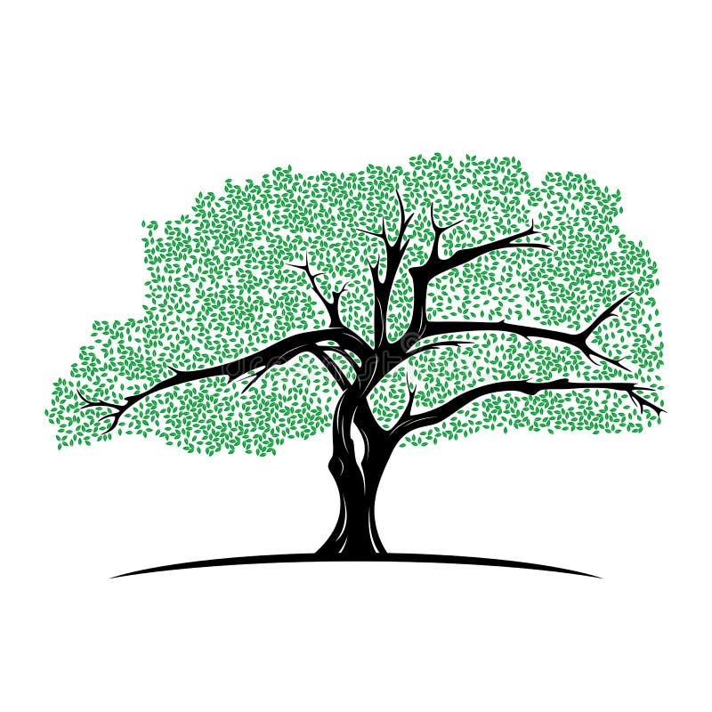 Free Tree Of Life Logo Design Inspiration Template. Abstract Vibrant Tree Logo Design. Root Vector Royalty Free Stock Photos - 155639298