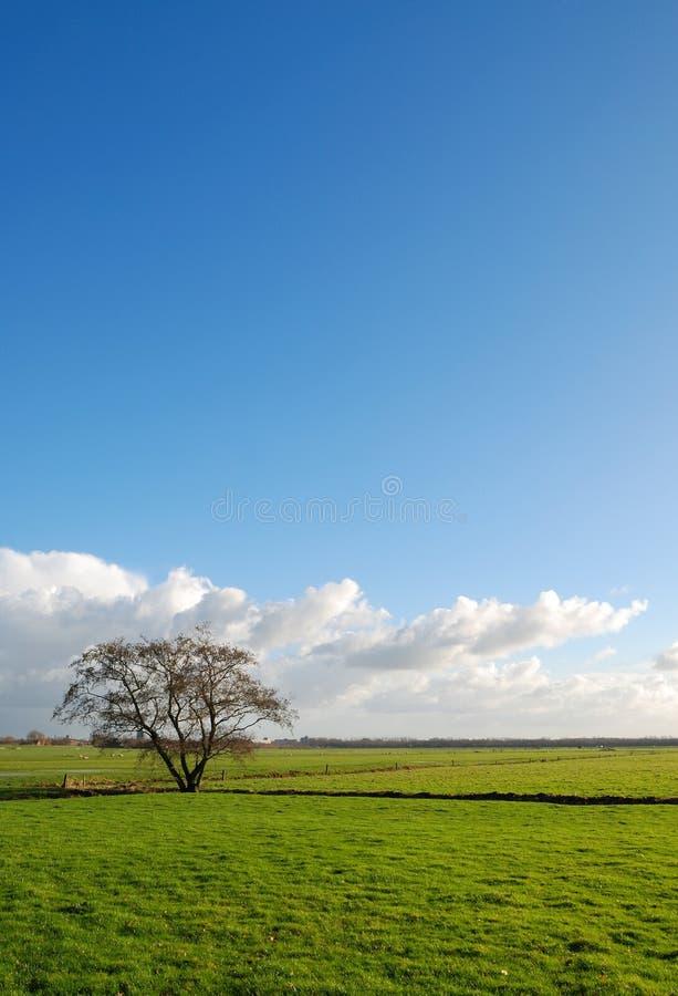 Free Tree On Field Royalty Free Stock Photos - 3929048