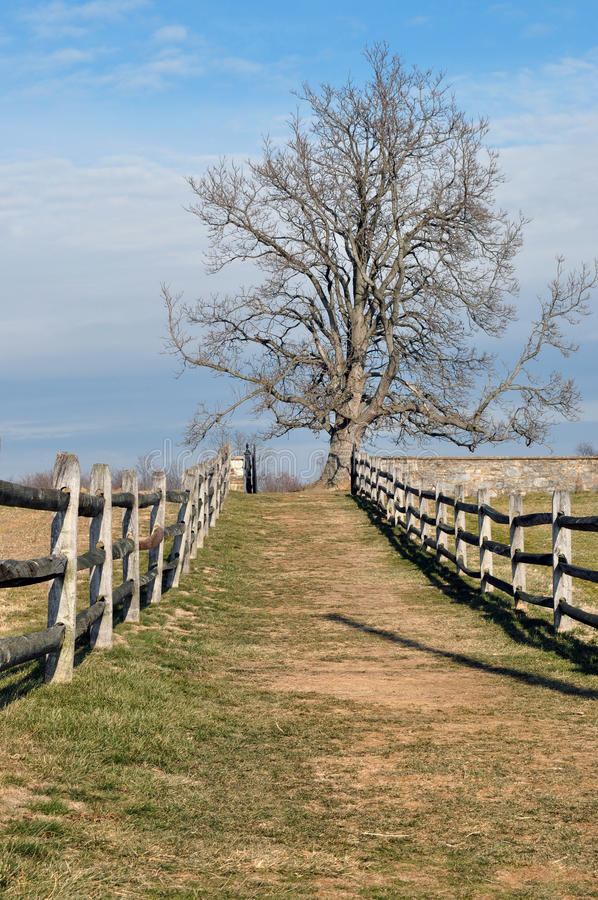 Free Tree On The Fence Royalty Free Stock Images - 18411479