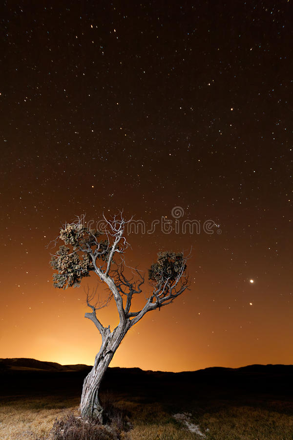 Download Tree during an orange dusk stock image. Image of night - 23982319