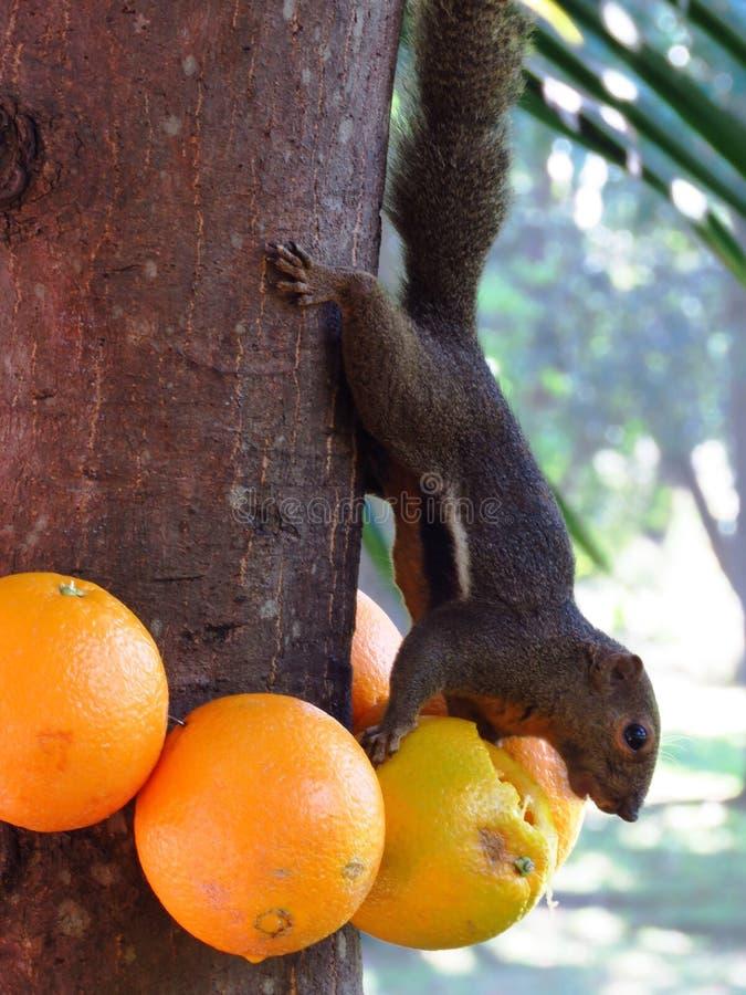 Tree, Orange, Fruit stock photos