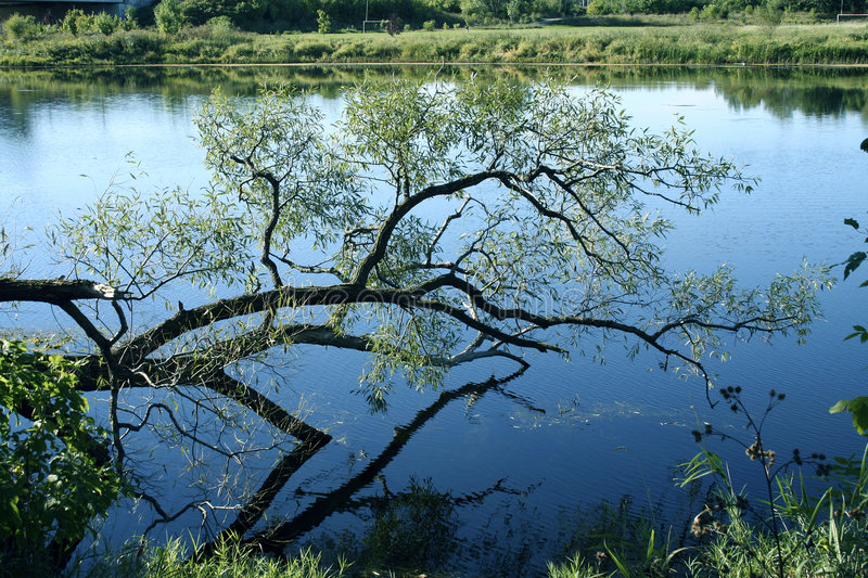 Tree by Ottawa Canal stock photography