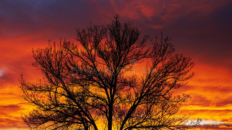 Tree outline at sunset. Sunset color in winter in Colorado royalty free stock images