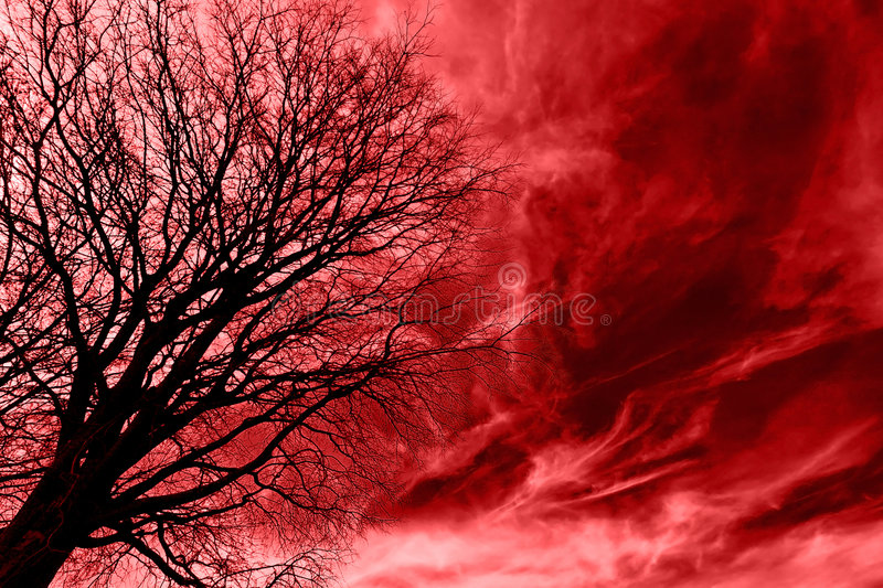Tree Over Blood. Naked tree over bloody cirrus sky royalty free stock photos