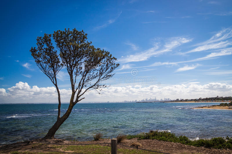 Tree over the ocean with landscape on Melbourne stock images