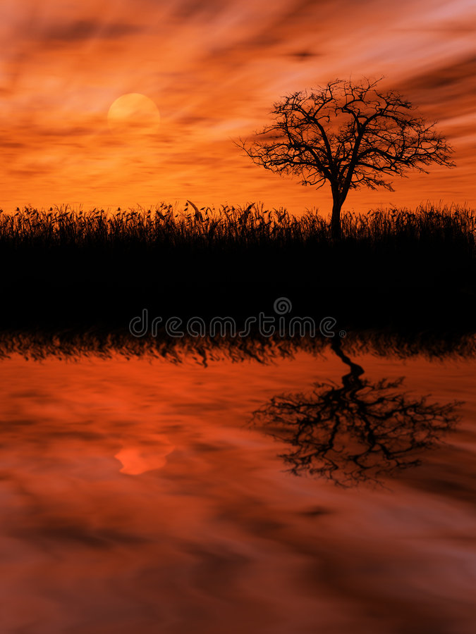 Tree over setting sun royalty free stock photo