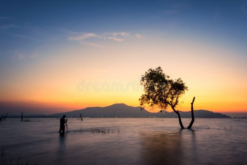 Tree over sunset in summer. Focus on tree stock photos