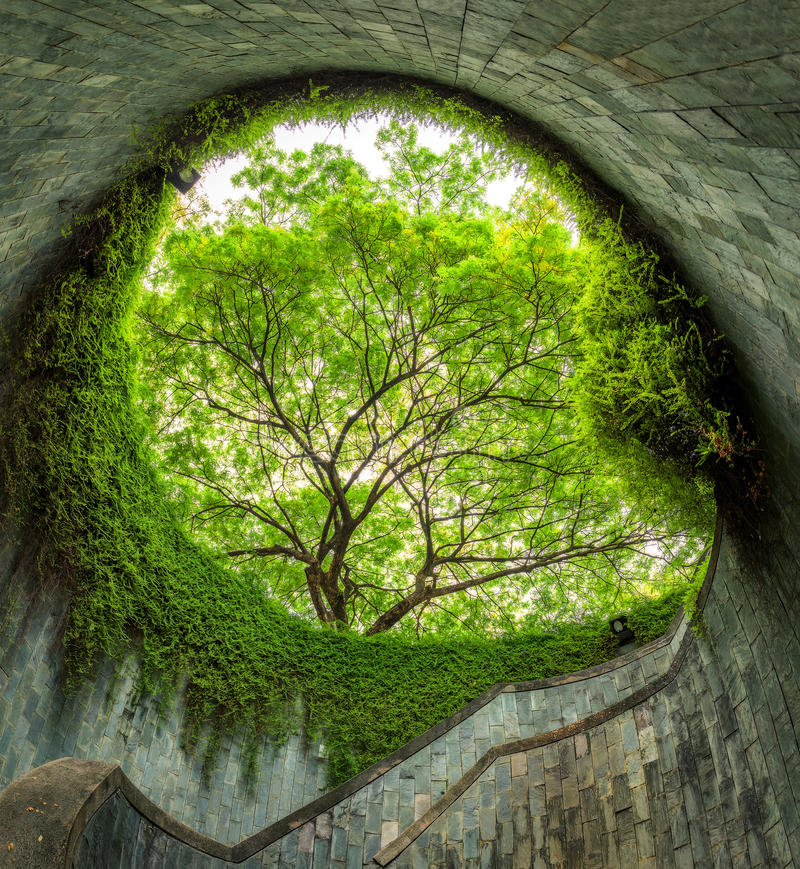 The tree over tunnel walkway at Fort Canning Park and Penang road., Singapore stock image