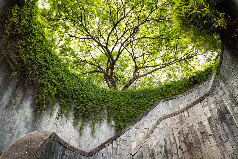 The tree over tunnel walkway at Fort Canning Park and Penang road., Singapore stock images