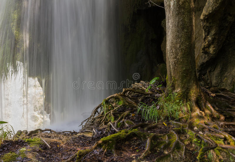Tree over waterfall int he plitvice park croatia. Tree over the waterfall int he plitvice park croatia royalty free stock photography