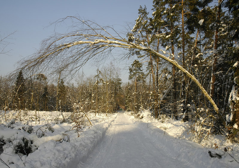 Tree over winter road royalty free stock photo