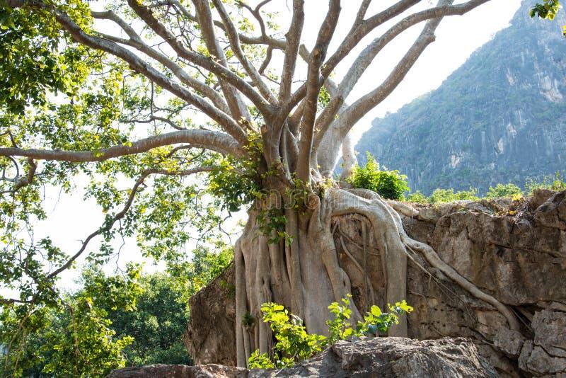 Tree på en klippa arkivfoton