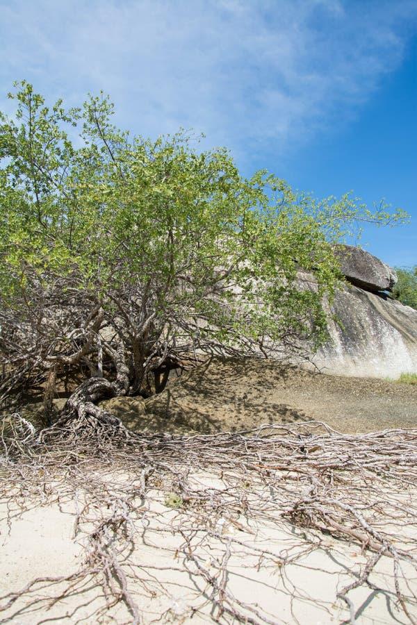 Tree på en strand fotografering för bildbyråer
