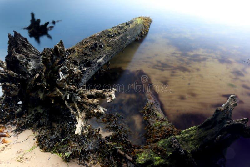 Tree på en strand royaltyfria foton