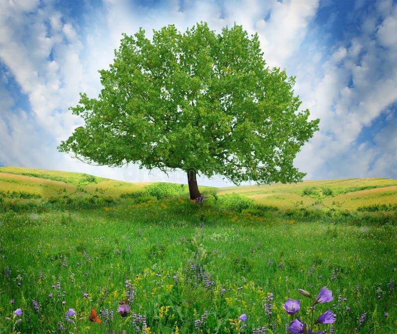 tree på fältet arkivbilder