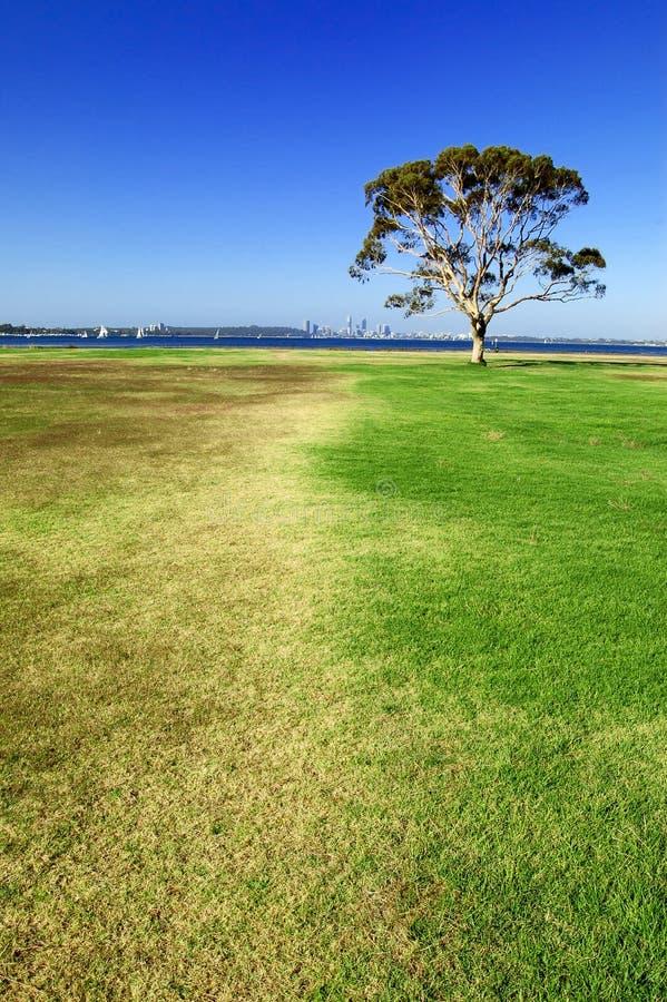 Tree på gräset royaltyfria bilder