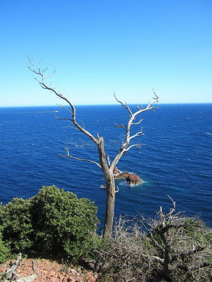 Tree på klippan royaltyfri bild