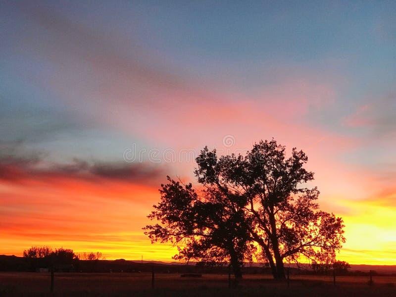 Tree på solnedgången arkivbilder