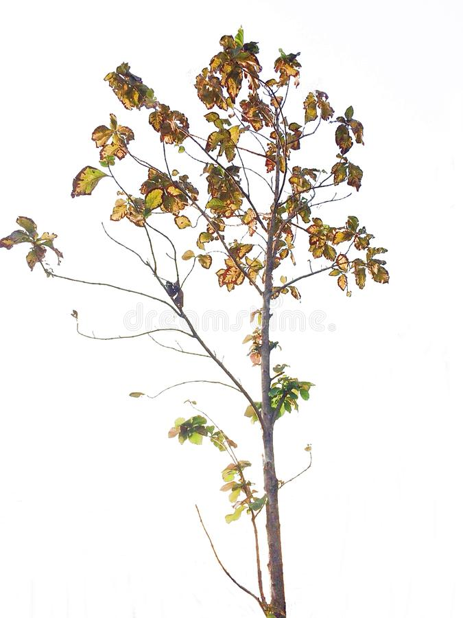 Tree på vit bakgrund royaltyfri bild