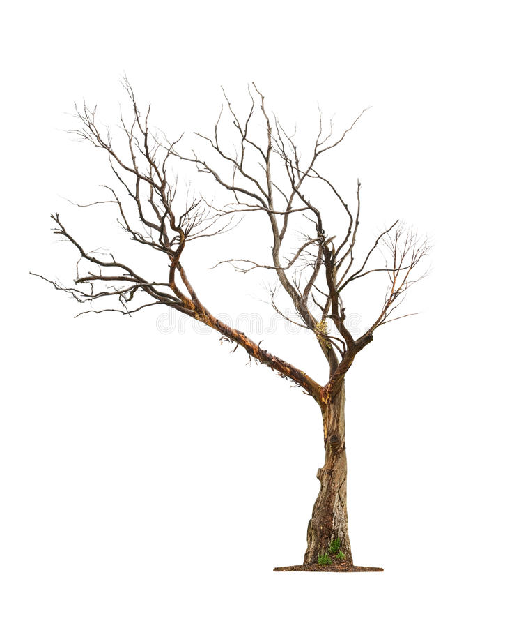 Tree på vit bakgrund arkivfoto