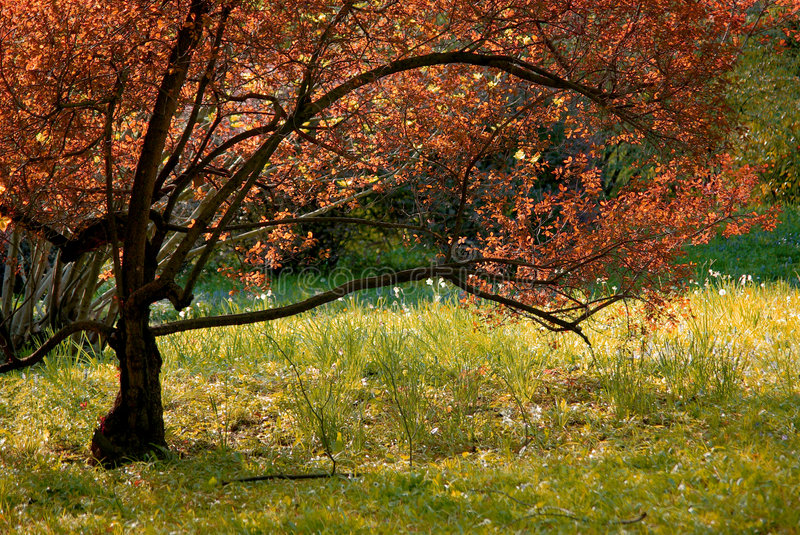 Tree in park royalty free stock image